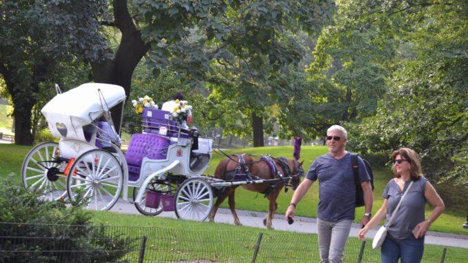 ¡El corazón de Nueva York junto a Times Square! Bienvenido a Central Park, descubre el parque más famoso del mundo